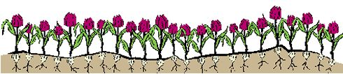 growingplants.jpg (22315 bytes)